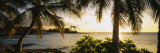 Palm Trees on the Coast, Kohala Coast, Big Island, Hawaii, USA Fotografie-Druck von  Panoramic Images