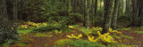 Trees in a Forest, Acadia National Park, Maine, USA Photographic Print by  Panoramic Images