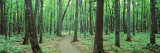 Walkway Running through a Forest, Black River National Forest, Michigan, USA Photographic Print by  Panoramic Images
