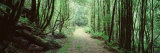 Trees along a Trail, Rain Forest Trail, Wild Rivers National Park, Australia Photographic Print by  Panoramic Images