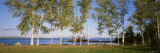 Trees along a Lake, Moosehead Lake, Maine, USA Fotografie-Druck von  Panoramic Images
