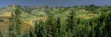 Aspen Trees and Oak Trees in a Forest, Cimmaron Ridge, Owl Creek, Colorado, USA Photographic Print by  Panoramic Images