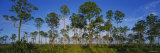 Trees on a Landscape, Everglades National Park, Florida, USA Photographic Print by  Panoramic Images