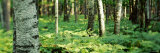 Trees and Forest Floor Photographic Print by  Panoramic Images