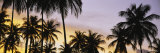Silhouette of Palm Trees at Sunset, Pigeon Point Beach, Tobago Photographic Print by  Panoramic Images
