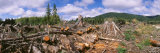 Deforestation in a Forest, Olympic National Park, Washington State, USA Photographic Print by  Panoramic Images