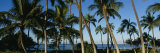 Palm Trees on the Beach, Hawaii, USA Fotoprint van Panoramic Images,