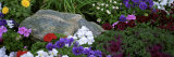 Flowers in a Garden, Alaska Photographic Print by  Panoramic Images