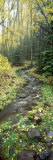 Stream Flowing through a Rainforest, Utah, USA Photographic Print by Panoramic Images 