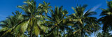 Palm Trees, Kauai, Hawaii, USA Photographic Print by  Panoramic Images