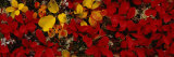 Leaves, Denali National Park, Alaska, USA Photographic Print by Panoramic Images 