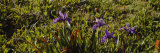 Flowers, Westport, California, USA Photographic Print by  Panoramic Images