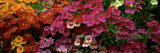Flowers Photographic Print by Panoramic Images 
