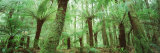 Trees in a Forest, Franklin Gordon Wild Rivers National Park, Tasmania, Australia Fotodruck von  Panoramic Images