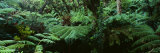 Trees in a Forest, Hawaii Volcanoes National Park, Hawaii, USA Fotoprint van Panoramic Images,