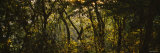 Sunset over a Forest, Monteverde Cloud Forest, Costa Rica Photographic Print by  Panoramic Images