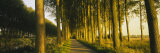 Trees on Both Sides of a Path, Brugge, Belgium Photographic Print by  Panoramic Images