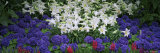 Lilies in a Garden, Botanical Gardens of Buffalo and Erie County, Buffalo, New York, USA Photographic Print by Panoramic Images 