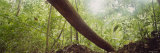 Tree Trunk, Carara National Park, Costa Rica, USA Photographic Print by  Panoramic Images