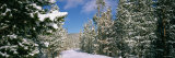 Coniferous Trees Covered with Snow, Lewis and Clark County, Montana, USA Photographic Print by  Panoramic Images