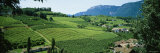 Fields, Bolzano, Italy Photographic Print by  Panoramic Images