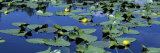Pond with Lily Pads, Wyoming, USA Photographic Print by  Panoramic Images