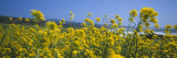 Flowers, California, USA Photographic Print by  Panoramic Images