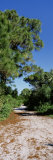 Trees along a Walkway in the Forest, Honeymoon Island State Park, Florida, USA Photographic Print by  Panoramic Images