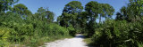Trees along a Walkway, Honeymoon Island State Park, Florida, USA Photographic Print by  Panoramic Images