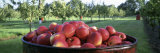 Apples in a Container Photographic Print by  Panoramic Images