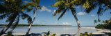 Palm Trees on the Beach, Mataiva, Tuamoto Islands, French Polynesia Stampa fotografica di Panoramic Images,