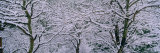 Bare Trees Covered with Snow, Montana, USA Photographic Print by  Panoramic Images