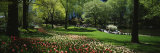 Flowers in a Park, Central Park, Manhattan, New York, USA Photographic Print by  Panoramic Images