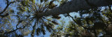 Trees in the Wilderness, Myakka River State Park, Florida, USA Photographic Print by  Panoramic Images