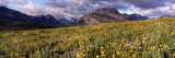 Flowers in a Field, Glacier National Park, Montana, USA Photographic Print by  Panoramic Images