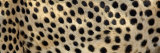 Spots on a Cheetah Photographic Print by Panoramic Images 