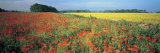 Flowers in a Field, Bath, England Photographic Print by Panoramic Images