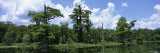 Cloud over Trees, Wakulla Springs State Park, Florida, USA Photographic Print by  Panoramic Images