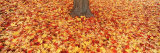 Autumn Leaves near a Tree Trunk, Grand Rapids, Michigan, USA Photographic Print by  Panoramic Images