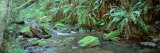Stream Flowing through a Rainforest, Van Damme State Park, Mendocino, California, USA Stampa fotografica di Panoramic Images,