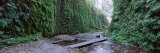 Trees in a Forest, Fern Canyon, Prairie Creek Redwoods State Park, California, USA Photographic Print by  Panoramic Images