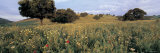 Wild Flowers in a Field, Andalucia, Spain Photographic Print by  Panoramic Images
