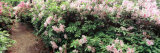 Flowers in a Garden, Azaleas Garden, Manteo, North Carolina, USA Photographic Print by  Panoramic Images