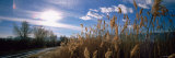 Pampas Grass Growing along a Country Road, Townsend, Montana, USA Photographic Print by  Panoramic Images