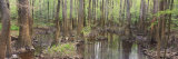 Reflection of Trees in Water, Congaree National Park, South Carolina, USA Fotodruck von  Panoramic Images