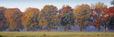 Trees in a Garden, South Bohemia, Czech Republic Photographic Print by  Panoramic Images