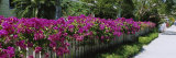 Azaleas on a Picket Fence along a Sidewalk, Boca Grande, Gasparilla Island, Florida, USA Photographic Print by  Panoramic Images