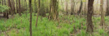 Trees in the Forest, Congaree National Park, South Carolina, USA Fotografie-Druck von  Panoramic Images