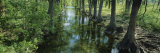 Reflection of a Tree in Water, USA Photographic Print by  Panoramic Images