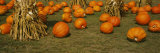 Corn Plants with Pumpkins in a Field, South Dakota, USA Photographic Print by  Panoramic Images